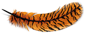Feather with tiger stripes